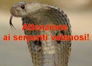 attenzione-serpenti-velenosi