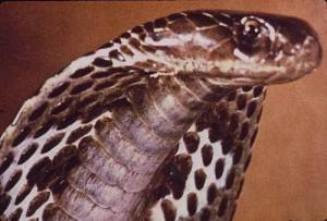 serpente_nemico