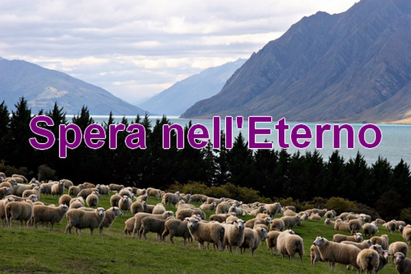 pecore-lago-blog