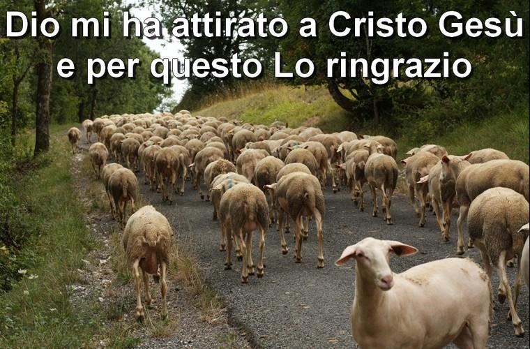 pecore-seguono-pastore