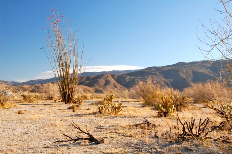 Dry-desert-landscape