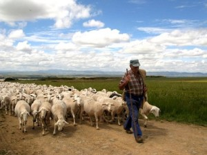 shepherd-and-his-flock-near-santo-domingo-de-la-calzada