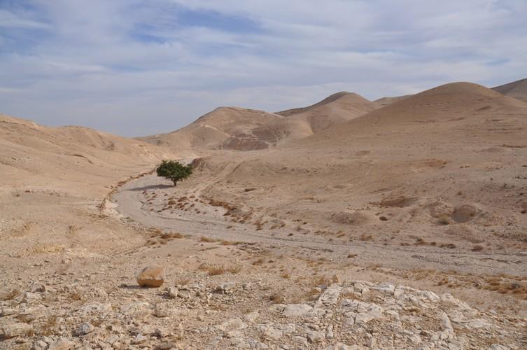 lone-tree-near-wadi-qelt