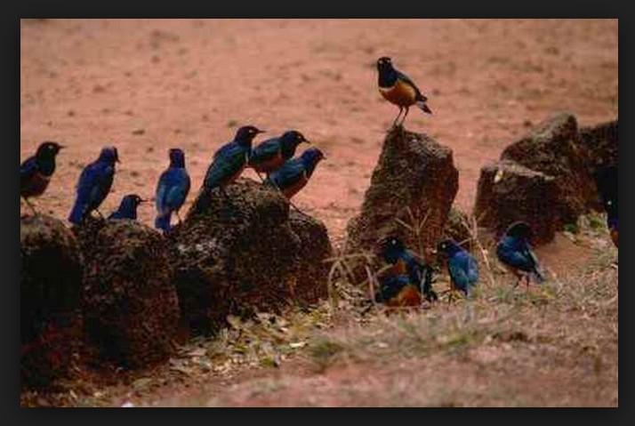 uccelli-seme-strada