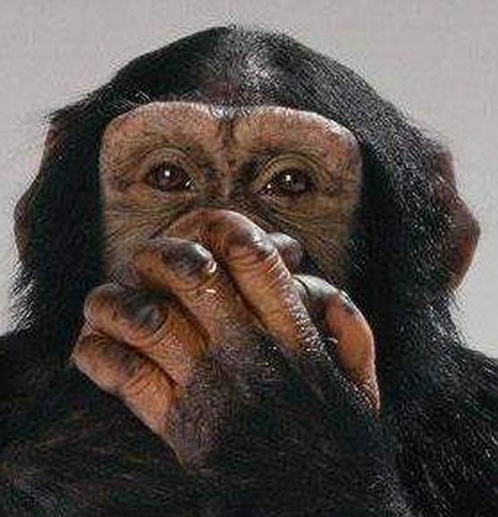 scimmia-silenzio